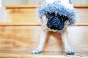 January Blues: How To Survive Winter in Chicago//List Maker Picture Taker