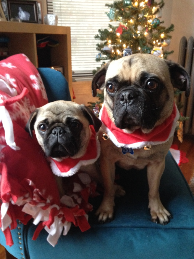 Your pug(s) of the day!