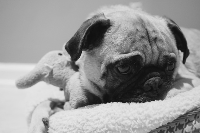 Pugs//Links & Loves//List Maker Picture Taker