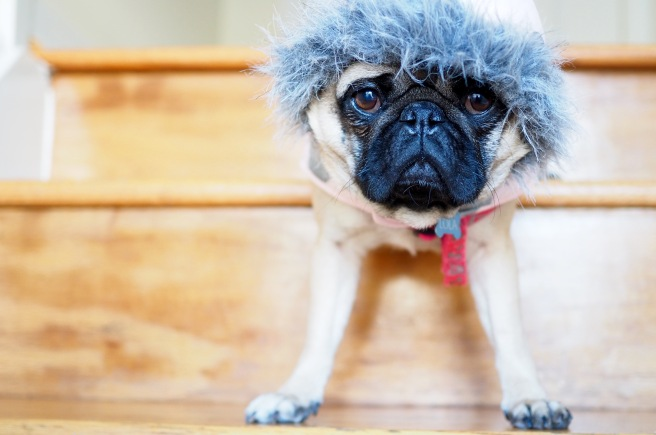 Lola the pug//Sunday Links & Loves//List Maker Picture Taker