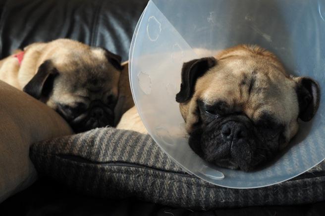 Pug Snuggles//Friday Links & Loves//List Maker Picture Taker